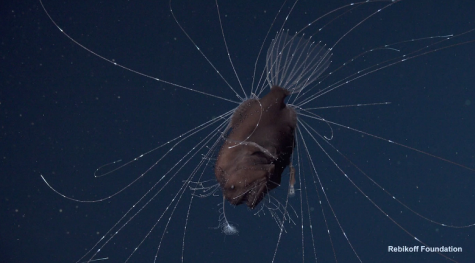 Weekly Science News: New Bizarre Glowing Anglerfish Recently Discovered