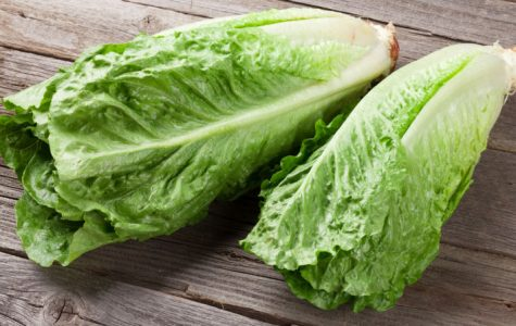 Romaine lettuce tainted with E. coli bacteria. Photo credits: Cal Coast News