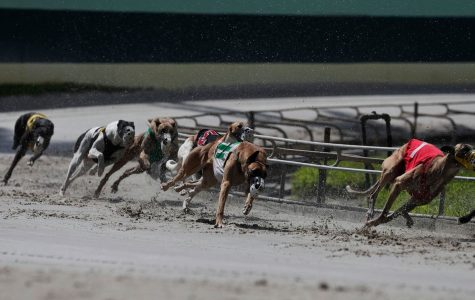 Florida Votes to Ban Greyhound Racing