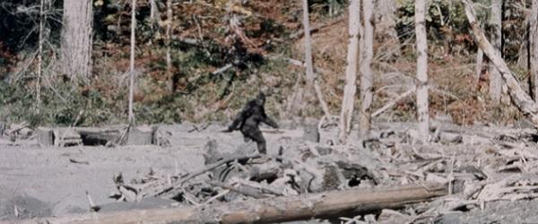 Montana Man Shot at, Mistaken for Bigfoot