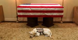 George H.W. Bush's service dog, Sully, lays by his late friend's casket. (Sully HW Bush/Instagram)