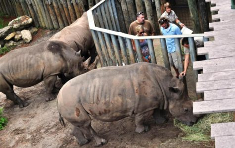 2-Year-Old Injured After Falling Into Rhino Exhibit