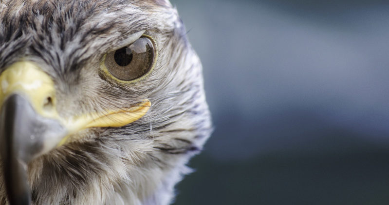 Have you Seen a Bird Since the Shutdown?