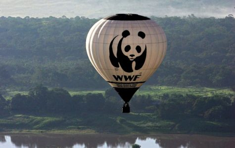 Anti-Poaching Militants Allegedly Funded by WWF Accused of Torture, Murder