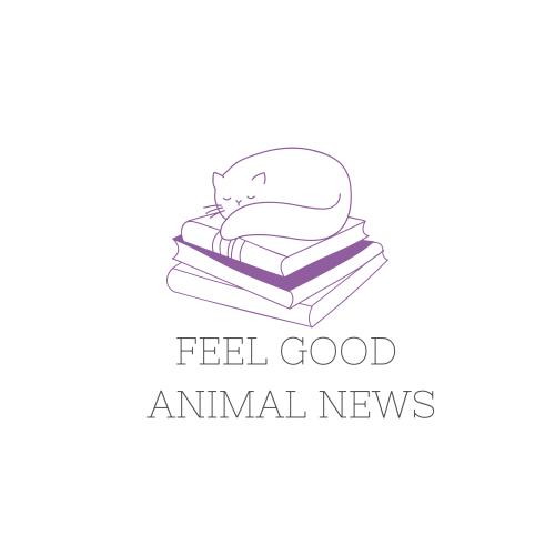 Feel Good Animal News!